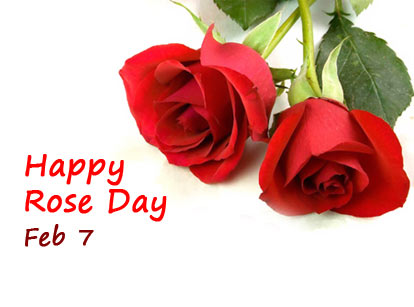 Rose Day 2019 Is On Feb 07 When Is Rose Day