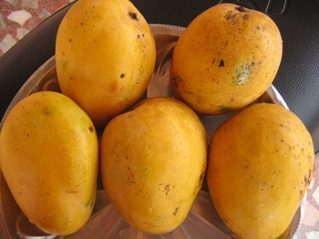 National Fruit of India - Mango